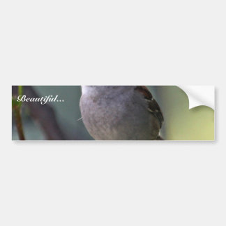 White-crowned Sparrow Bumper Stickers