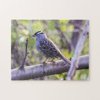 White-crowned Sparrow Jigsaw Puzzle