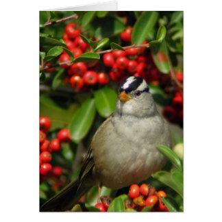 White-Crowned Sparrow • Joe Sweeney - card
