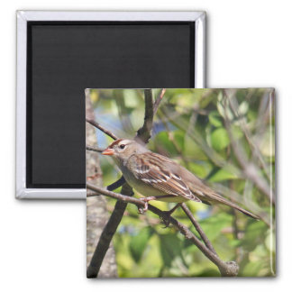 White Crowned Sparrow Magnet
