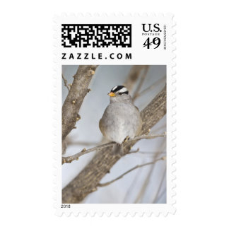 White-crowned Sparrow on a cold day Stamp