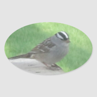White Crowned Sparrow Oval Sticker