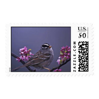 White-crowned Sparrow Postage