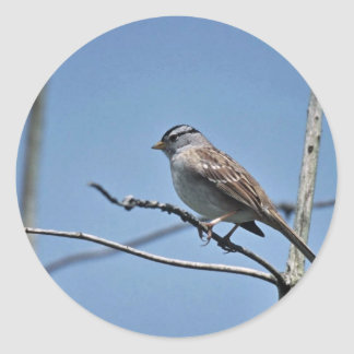 White-crowned Sparrow Round Stickers