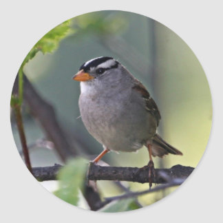 White-crowned Sparrow Stickers