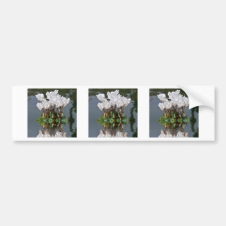 White cyclamen flowers in the water bumper sticker