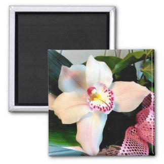 White Cymbidium Orchid Magnet