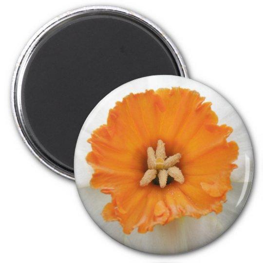White Daffodil Magnet