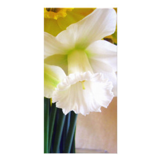 White Daffodil photocard Card