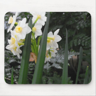 White Daffodils Mouse Pad