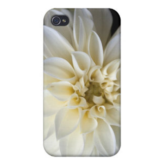 white dahlia flowers iPhone 4 cover