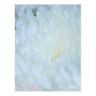 White Dahlia Petals Postcard