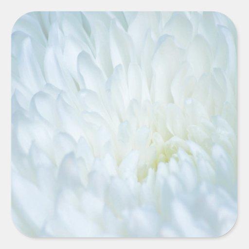 White Dahlia Petals Sticker