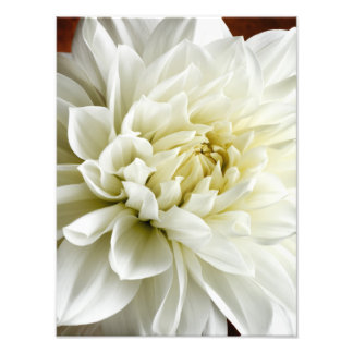 White Dahlia Sepia Dahlia Closeup Flower Template Photo Print