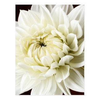 White Dahlia Sepia Dahlia Closeup Flower Template Postcard
