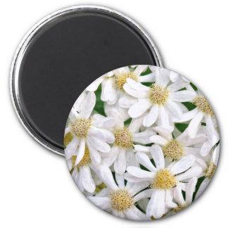 White dahlias 2 inch round magnet