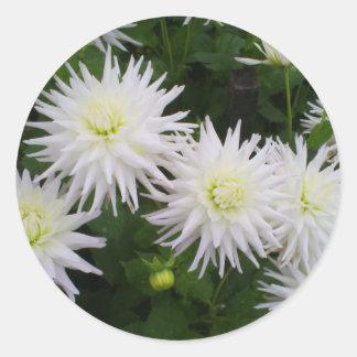 White Dahlias Classic Round Sticker