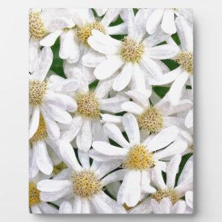 White dahlias plaque