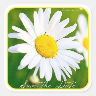White Daisies - Celebrate Love Save the Date Square Sticker