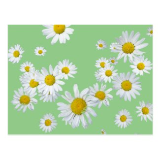 White Daisies Cust. Color DIY Postcard