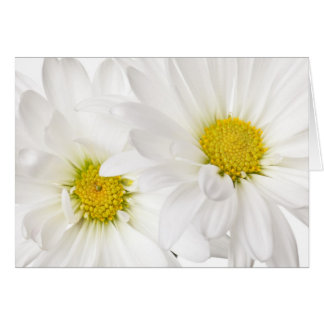 White Daisies - Customized Daisy Flower Template