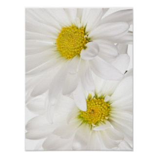 White Daisies - Customized Daisy Flower Template Poster