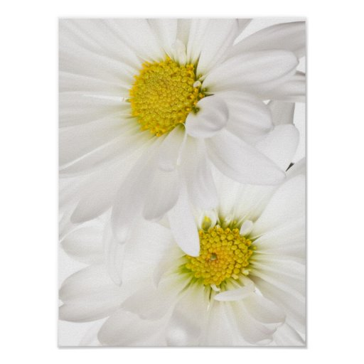 White Daisies - Customized Daisy Flower Template Posters