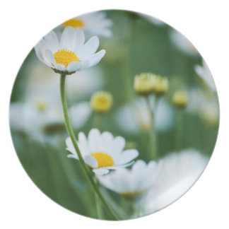 White Daisies in a Field - Customized Daisy Melamine Plate