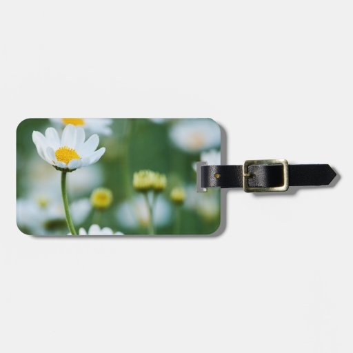 White Daisies in a Field - Customized Daisy Tags For Bags