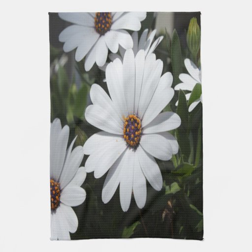 White Daisies in Bloom Hand Towels
