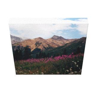 White Daisies Purple Fireweed Talkeetna Mtns. Canvas Print