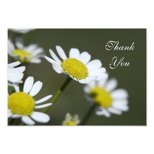 White Daisies Thank You Notes - Flat Card