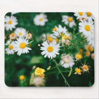 White daisies with a yellow center mouse pad