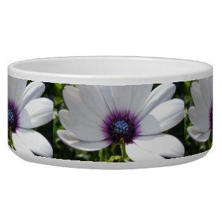 White Daisy - 1 Bowl