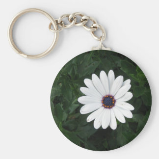 White Daisy  African Daisy purple center Keychain