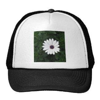 White Daisy  African Daisy purple center Trucker Hat