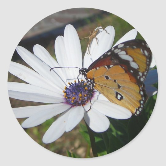 White Daisy and Butterfly Classic Round Sticker