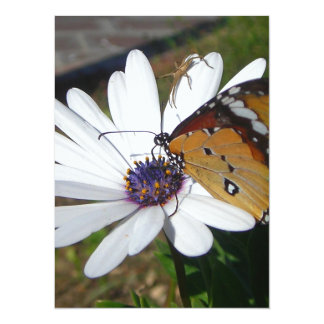 White Daisy and Butterfly 5.5x7.5 Paper Invitation Card