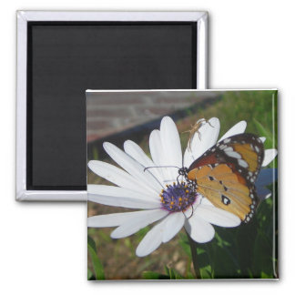 White Daisy and Butterfly Refrigerator Magnet