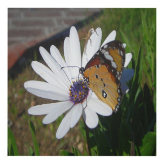 White Daisy and Butterfly Panel Wall Art