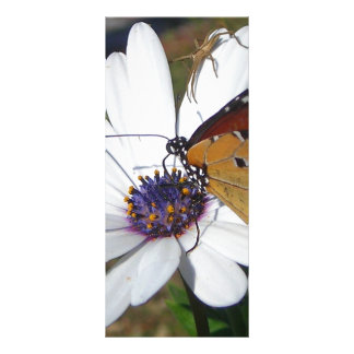 White Daisy and Butterfly Rack Card