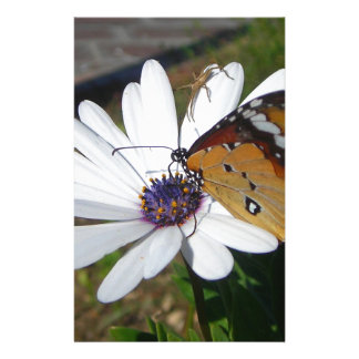 White Daisy and Butterfly Stationery