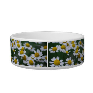 White Daisy and its meaning Bowl