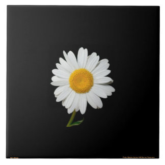 WHITE DAISY BLACK BACKGROUND CERAMIC TILE