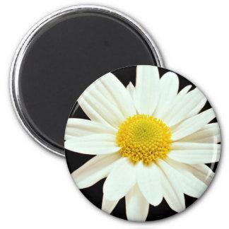 White daisy chrysanthemum  flowers 2 inch round magnet