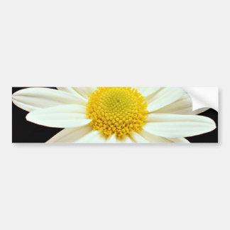 White daisy chrysanthemum  flowers bumper sticker