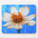 White daisy flower against light blue background mouse pads