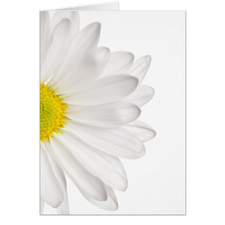 White Daisy Flower Background Customized Daisies Card