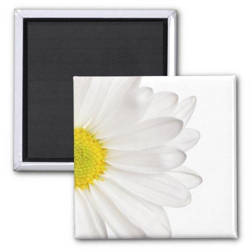 White Daisy Flower Background Customized Daisies Fridge Magnets