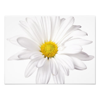 White Daisy Flower Background Customized Daisies Photo Print
